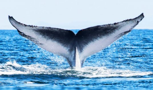 This Blue Whale Has a Serious Sense of Humor