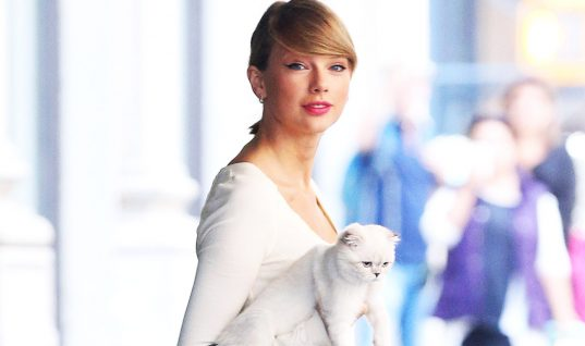 Top 7 Cutest Celebrity Pets