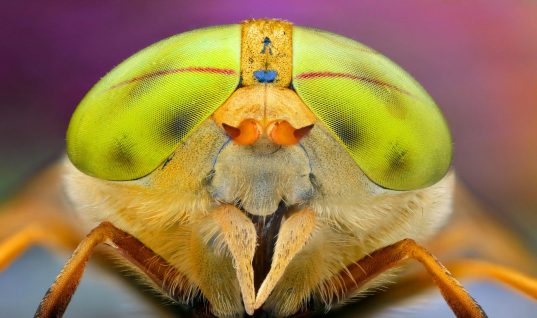 Top 12 Insects That Resemble Aliens