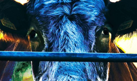 Cowspiracy: The Sustainability Secret – Film Review