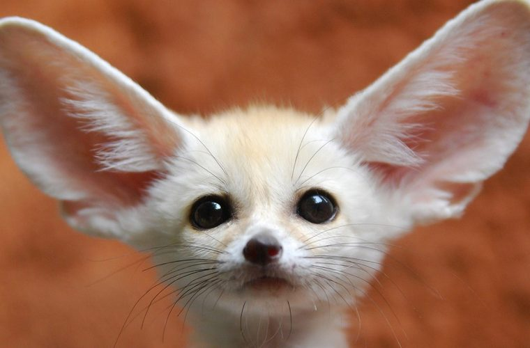 Top 10 Exotic Pets You Can Legally Own