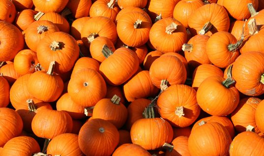 Top 5 Fall Foods That Naturally Boost Your Health