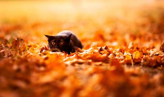 10 Cute Animals Playing in Autumn Leaves