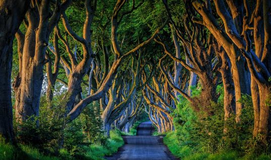 These 10 Real Roads Will Take You Somewhere Magical