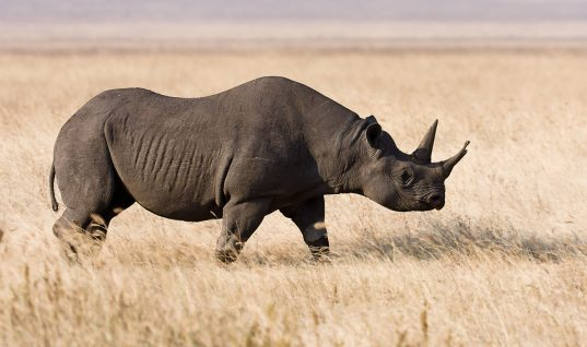 Ten Iconic Animals That Humans Hunted to Extinction