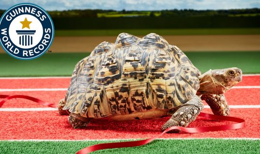 There's Nothing Ironic About the World's Fastest Tortoise