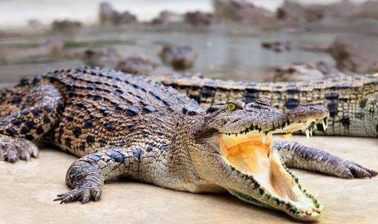Prison Island for Drug Convicts to Be Guarded by Actual Crocodiles