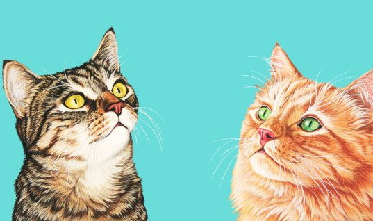 Cats: 15 Crazy Facts You Didn't Know (Part 2)