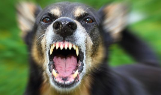 Top 10 Heroic Pets Who Solved Crimes (Part 1)