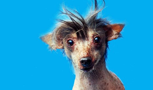 Top 30 Ugliest Dogs in the World (Part 3)