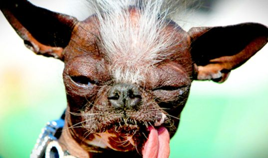 Top 30 Ugliest Dogs in the World (Part 1)