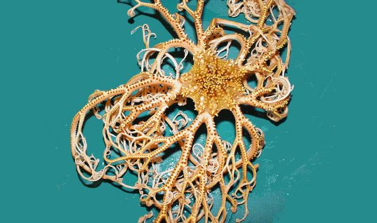 Sea Creatures: 34 Rare Species You Have Never Seen (Part 2)