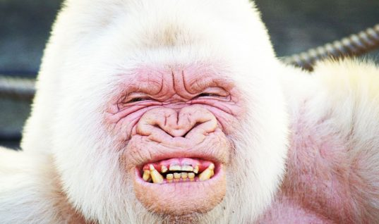 Albino Animals: 5 Intriguing Facts You Didn't Know