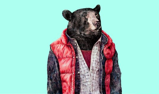 The Bear: 15 Things You Didn't Know (Part 1)