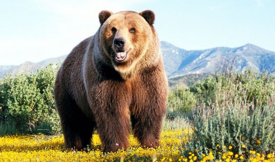Bear Facts: 15 Amazing Things You Didn't Know (Part 1)