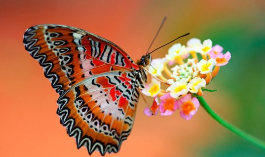 Butterfly Facts: 15 Things You Didn't Know (Part 1)