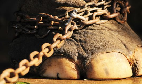 Circus Animal Abuse: 15 Things You Didn't Know (Part 1)