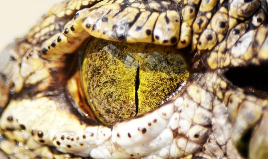 Crocodile Facts: 15 Things You Didn't Know (Part 1)