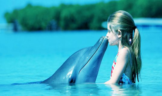 Dolphin Facts: 15 Things You Didn't Know (Part 2)