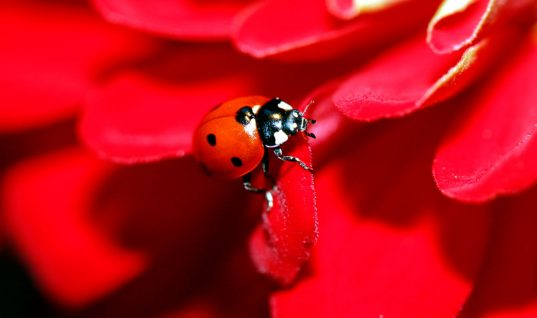 Ladybug Facts: 15 Things You Didn't Know (Part 2)