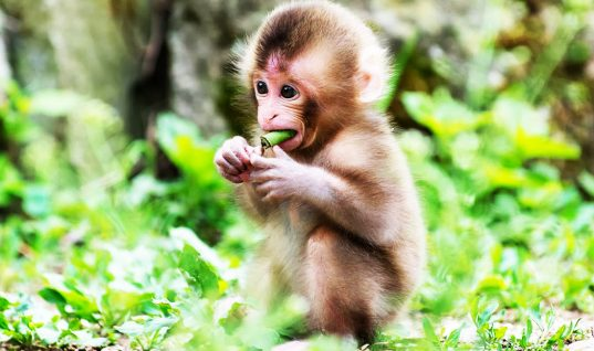 Monkey Facts: 15 Things You Didn't Know (Part 1)