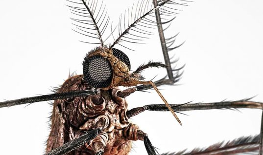 The Mosquito: 15 Interesting Facts (Part 1)