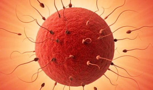 Ovulation: 15 Things You Didn't Know (Part 1)