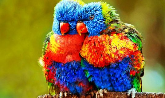 The Parrot: 15 Interesting Facts to Blow Your Mind (Part 1)