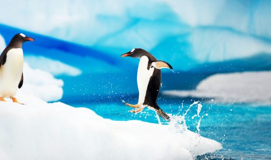 Penguin Facts: 15 Things You Didn't Know (Part 1)