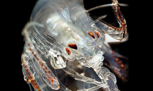 Sea Creatures: 34 Rare Species You Have Never Seen (Part 3)