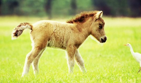 Pony Facts: 15 Things You Didn't Know (Part 1)