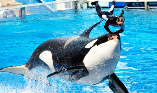 SeaWorld: 15 Facts You Didn't Know (Part 1)