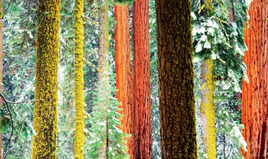 Sequoia: 15 Things You Didn't Know (Part 1)