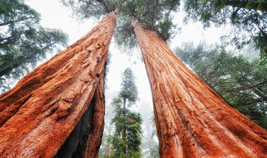 Sequoia: 15 Things You Didn't Know (Part 2)