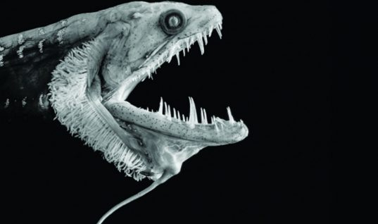 Sea Creatures: 34 Rare Species You Have Never Seen (Part 4)