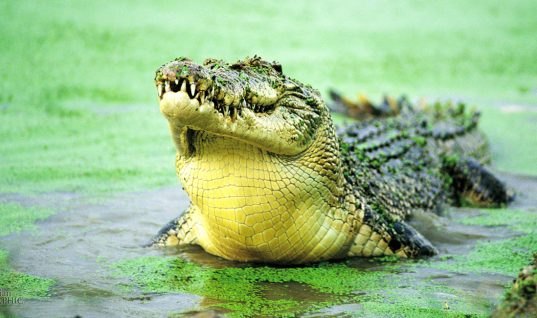 Aggressive Animals: 16 Creatures You Should Avoid (Part 1)