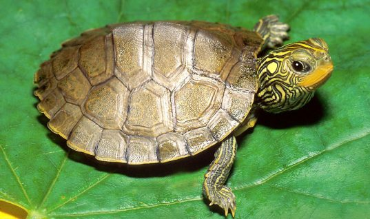 Turtle Facts: 15 Fascinating Things You Didn't Know (Part 1)