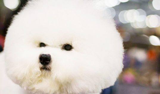 Westminster Dog Show: 15 Things You Didn't Know