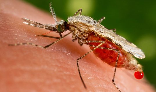 Zika Virus: 15 Things You Didn't Know (Part 2)