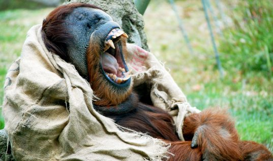 Zoos: 10 Things You Didn't Know (Part 1)