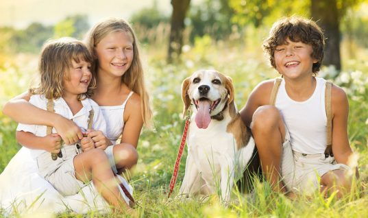 Top 9 Greatest Family Friendly Dog Breeds