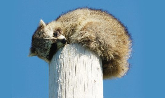 23 Unbelievably Cute Pictures of Sleeping Animals