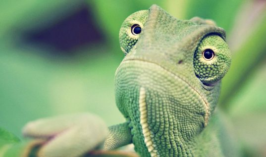 Top 7 Surprising Benefits of Owning Exotic Pets