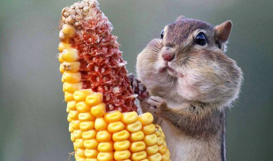 16 Pictures of Cute Animals Eating Snacks