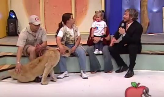A Lion Grabbed Her Baby On Live TV. What The Handler Told Mom To Do Sounds Insane!