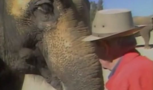 Elephant Hasn't Seen Her Owner In 15 Years. But When She Hears His Voice…