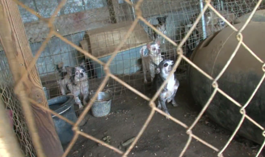 You Won't Believe How These Animals Were Being Treated