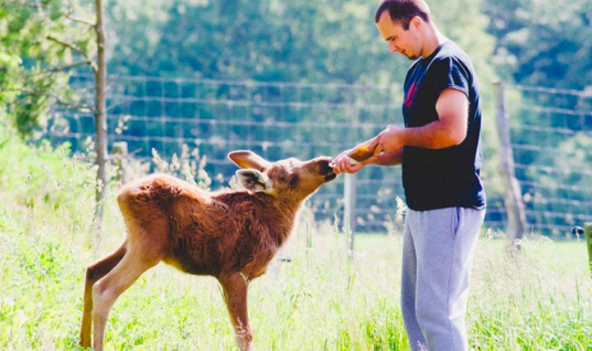 He Saved This Moose From Death, Now She Repays Him In The Sweetest Way