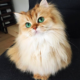Everyone Is Talking About Smoothie, The World's Most Photogenic Cat