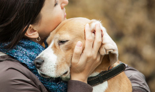 You'll Never Hug Your Dog Again After You Read This